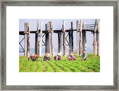 farmers at work around U-Bein Bridge Framed Print