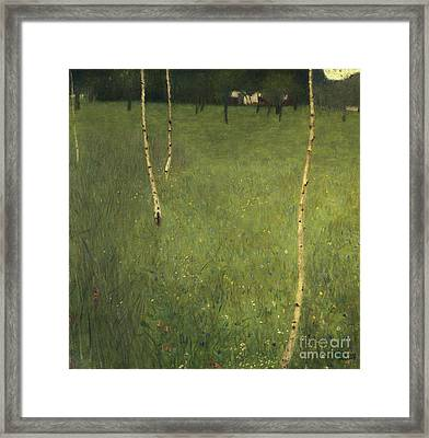 Farmhouse With Birch Trees Framed Print