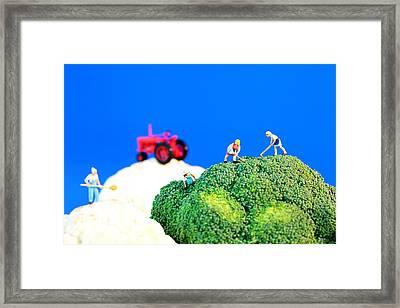 Farming On Broccoli And Cauliflower II Framed Print by Paul Ge