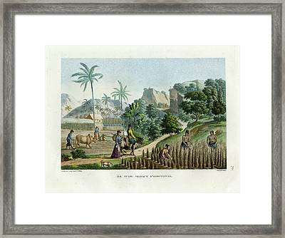 Framed Print featuring the drawing Farming On Guam Island by d apres Pellion
