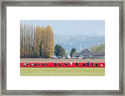 Farming Tulips L574 Framed Print by Yoshiki Nakamura