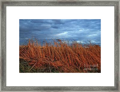 Farmland Winter Framed Print by Susan Yates