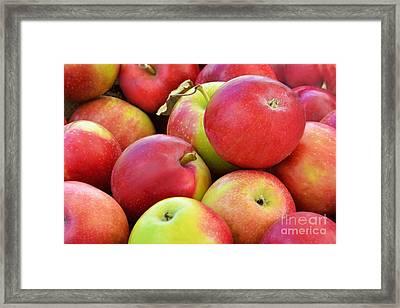 Farmstand  Fresh-picked  Apples Framed Print