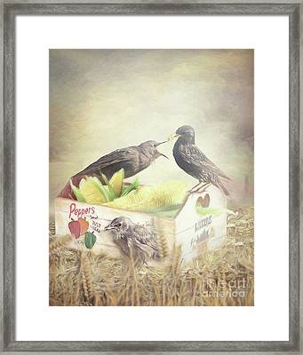 Farmstand Starlings Framed Print by Ulanawa Foote