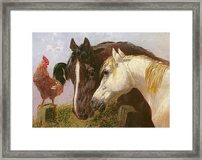 Farmyard Friends Herring Jnr Framed Print by John Frederick