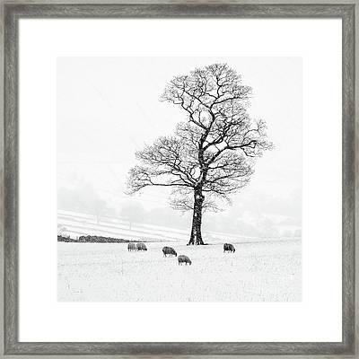 Farndale Winter Framed Print