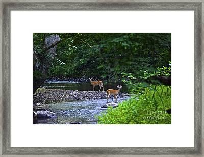 Fascinated Framed Print