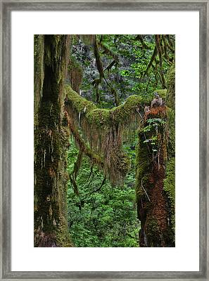 Fascinating Hoh Valley - Hoh Rain Forest Olympic National Park Onp Wa Usa Framed Print by Christine Till