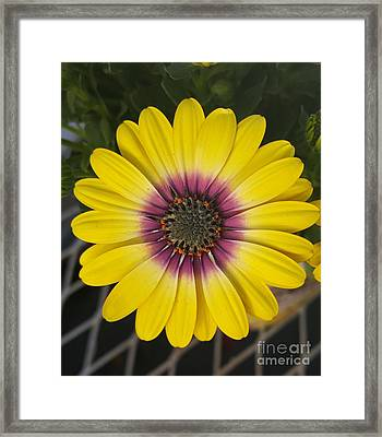 Fascinating Yellow Flower Framed Print