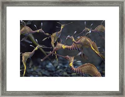 Fascination  Framed Print by Betsy Knapp