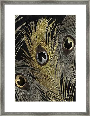 Fashion Feathers II Framed Print by Mindy Sommers