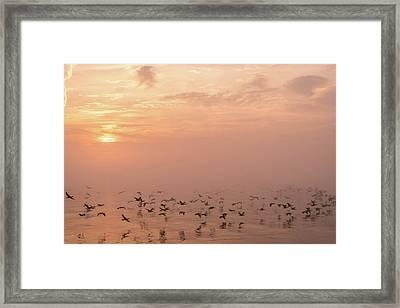 Fast Flight In Soft Pink Mist Framed Print