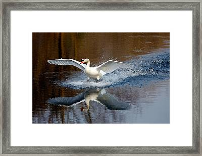 Fasten Your Seatbelts Framed Print