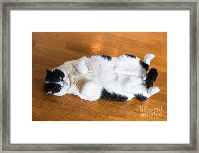 Fat Cat Relaxing Framed Print