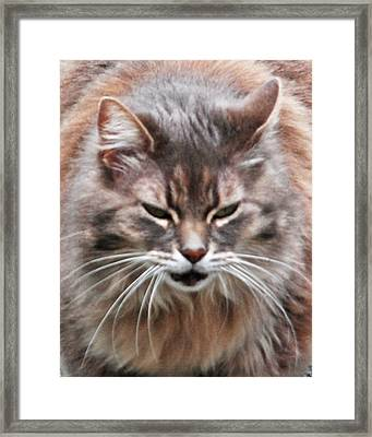 Fat Cats Of Ballard 4 Framed Print