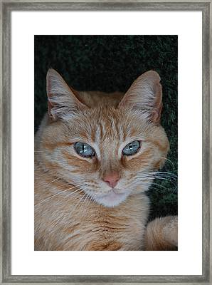 Fat Cats Of Ballard 5 Framed Print