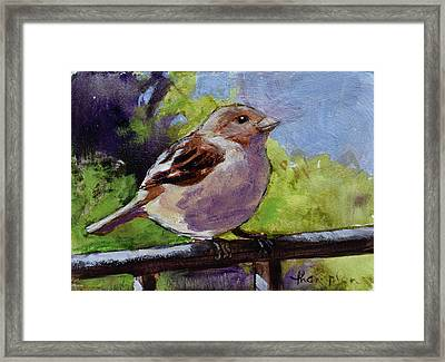 Fat Little Sparrow Framed Print by Tracie Thompson