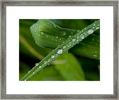 Fat Raindrops Framed Print by Robert Ullmann