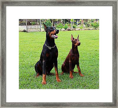 Father Amp Son Ultimo And Czar Framed Print