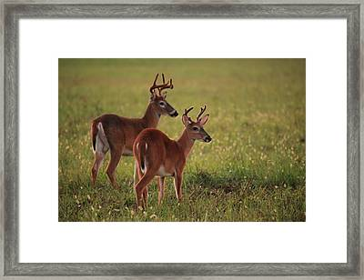 Framed Print featuring the photograph Father And Son by Doug McPherson