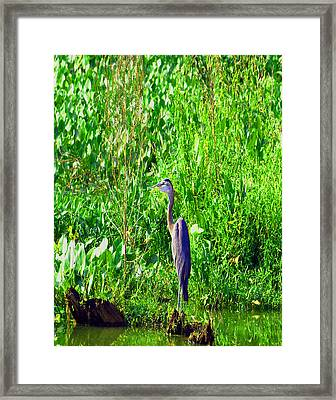Father Time Framed Print by Kim