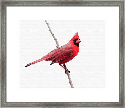 Father's Day Cardinal Framed Print