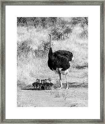 Fathers Day Framed Print by Chris Scroggins