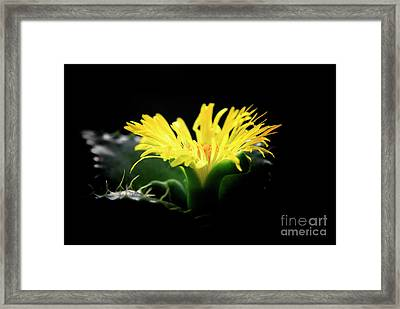 Framed Print featuring the photograph Faucaria Tigerina Tiger's Jaw by Charline Xia