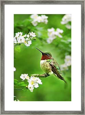 Fauna And Flora - Hummingbird With Flowers Framed Print