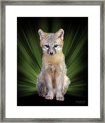 Faunagraph Framed Print by Torie Tiffany