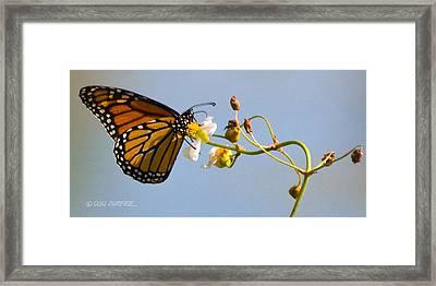Favorite Flower Framed Print