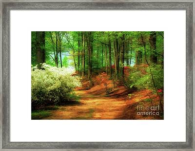 Favorite Path Framed Print by Lois Bryan