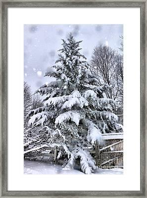 Favorite Tree Framed Print by Elizabeth Dow