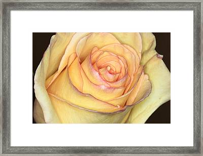 Favorite Yellow Framed Print
