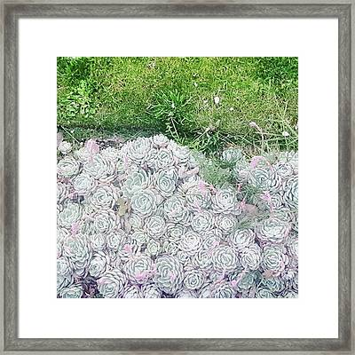 Favourites Growing Outside A Flat Round Framed Print by Natalie Anne