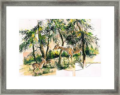 Fawn And Doe Framed Print