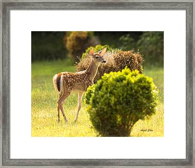 Framed Print featuring the photograph Fawn by Angel Cher