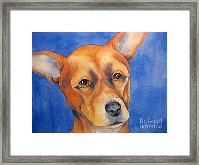 Fawn Chihuahua Framed Print