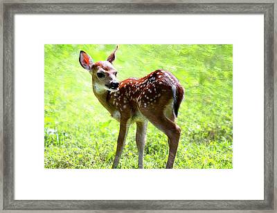 Fawn Deer In Field Oil Painting Framed Print by Design Turnpike