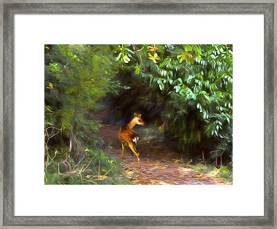 Fawn Forest Framed Print by Sharon Lisa Clarke