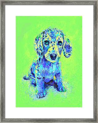 Green And Blue Dachshund Puppy Framed Print by Jane Schnetlage