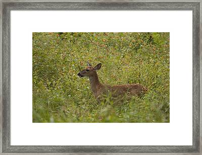 Fawn In A Field Of Flowers Framed Print by Tina B Hamilton
