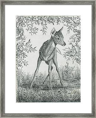 Fawn In Clearing Framed Print by Samuel Showman