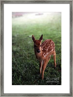 Fawn In Mist Framed Print