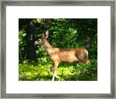 Fawn In Woods Framed Print