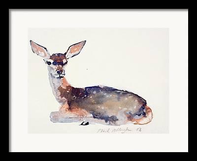 Deer Drawings Framed Prints