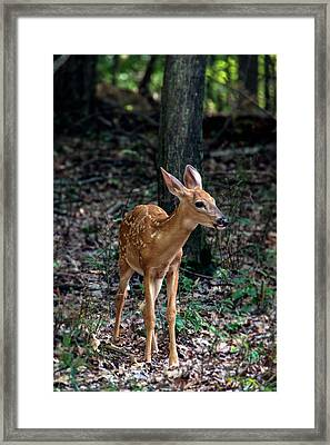 Fawn Framed Print by Michael Demagall
