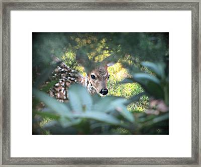 Fawn Peeking Through Bushes Framed Print