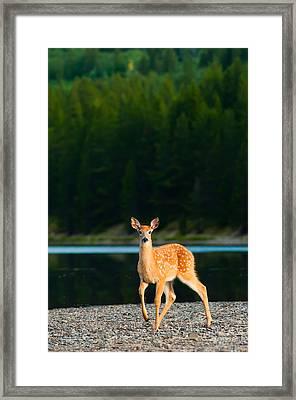 Fawn Framed Print by Sebastian Musial