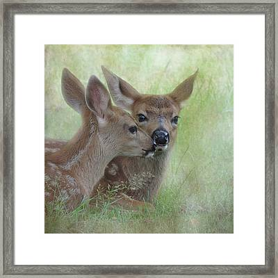Fawn Secrets Framed Print